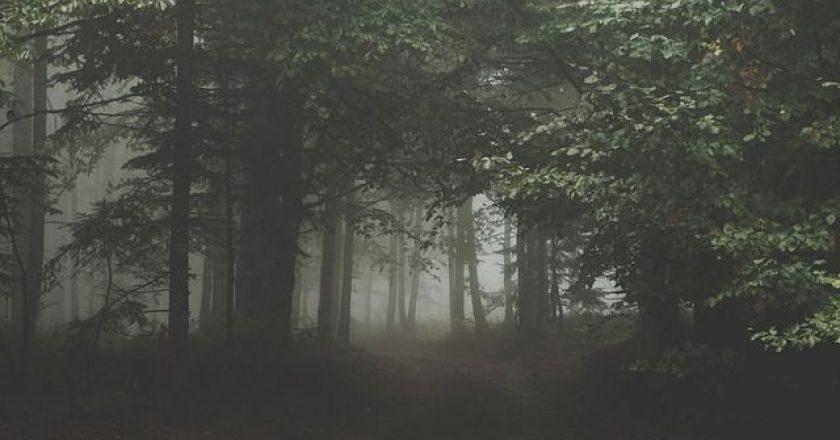 dasos-nyxta-omixli-forest-fog