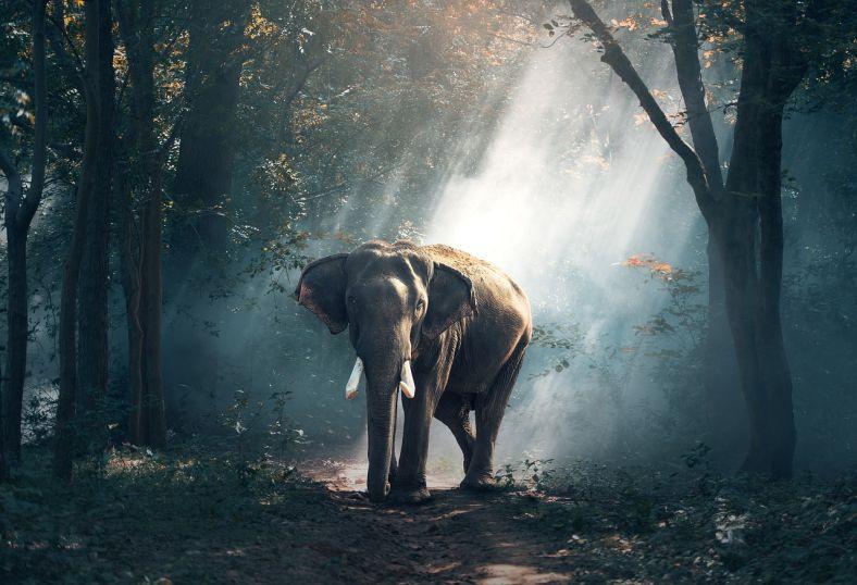 elephant-elefantas