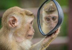 maimou-kathreftis-mirror