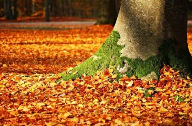 fall-autumn-fthinoporo-fylla-leaves-fysi