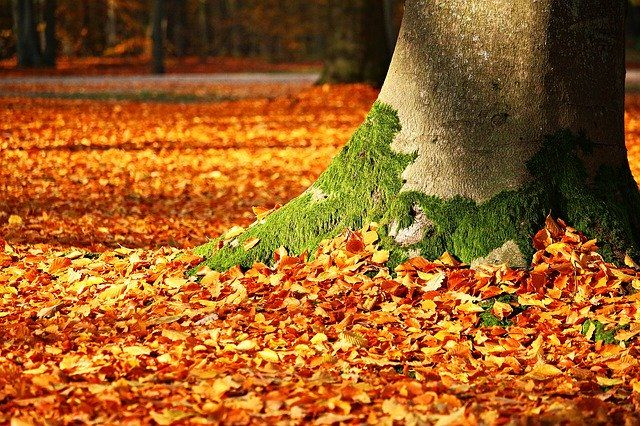 fall-autumn-fthinoporo-fylla-leaves-fysi