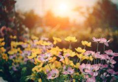 louloudia-kipos-flowers-fyta