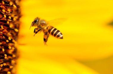 melissa-bee-loulouthi-anthos-gyri-fysi