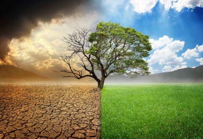 dentro-perivallon-klimatiki-allagi-ksirasia